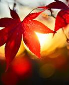 88大奖娱乐_余红:北极村的红叶