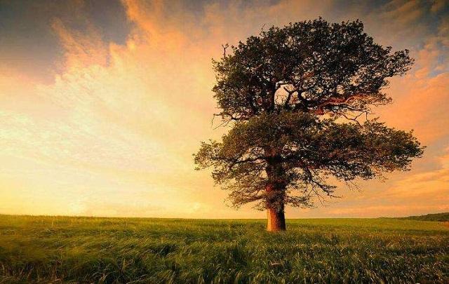 """""""作为树的形象和你站在一起"""""""