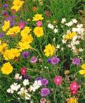 路边的野花可以采