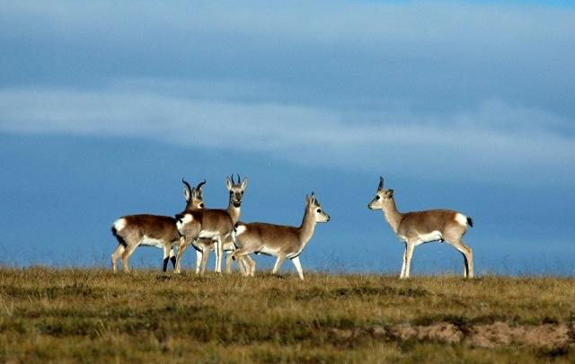 《野生动物保护法》将修改对野生动物保护的反省让书写野生动物的作家获得哪些启示